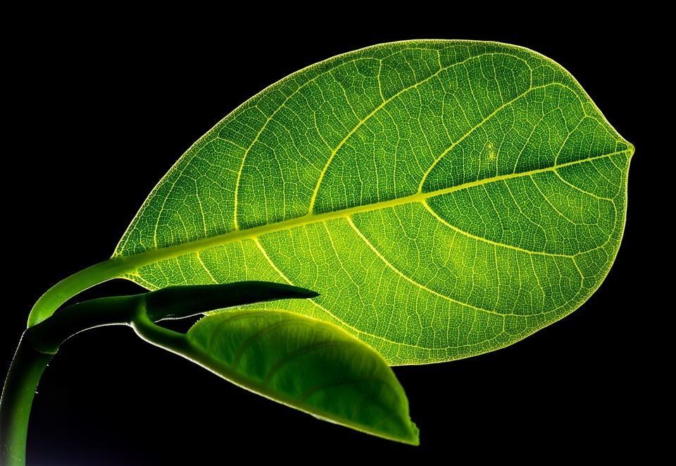 La guerra contro il carbonio è una guerra contro la medicina naturale: tutte le molecole medicinali sono composte dal diossido di carbonio