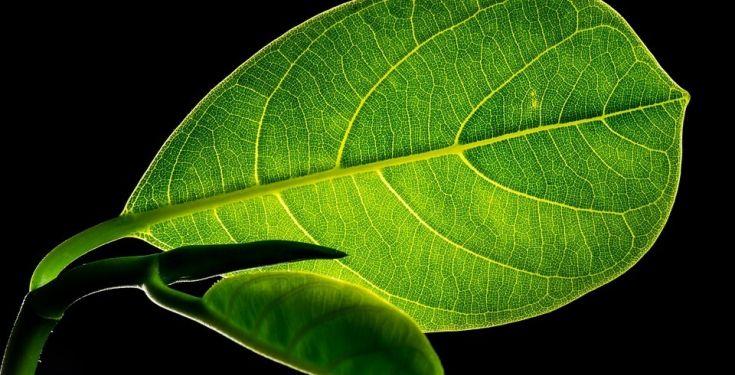 Guerra al CO2: guerra alla medicina naturale
